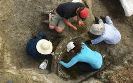 Khai quật hộp sọ khổng lồ dài 2 mét, nặng 1,3 tấn: Bí mật đáng sợ cách đây chục triệu năm hé lộ