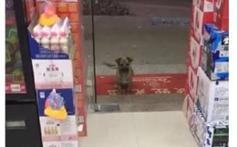 """Tốt bụng cho chú chó hoang chút đồ ăn, ngày hôm sau chủ cửa hàng """"dở khóc dở cười"""" khi bắt gặp cảnh tượng trước cửa"""