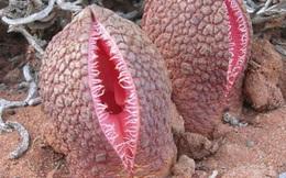 Những loài thực vật kỳ lạ nhất hành tinh