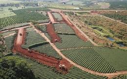 Bảo Lộc thành 'điểm nóng' đất đai, Chủ tịch, nguyên Chủ tịch thành phố bị thanh tra
