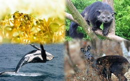 1001 thắc mắc: Những loài động vật nào tỏa mùi thơm đặc biệt?