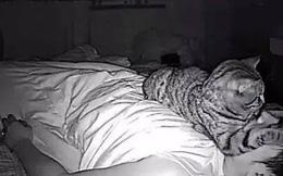 """Thức dậy bỗng dưng thấy cả người đau nhức, cô gái vội kiểm tra camera mới ngỡ ngàng nhận ra mình bị mèo cưng """"trừng phạt"""" cả đêm"""