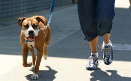 Tổ chức 1 cuộc thi chạy cho người và chó, vị thiên sứ xấu hổ không dám ngẩng mặt lên khi chứng kiến kết quả cuối cùng