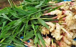 Loại củ được trồng nhiều ở Việt Nam: Nhiều công dụng tuyệt vời nhưng có 1 lưu ý đặc biệt cần biết