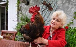 Quốc gia châu Âu ban hành luật cho gà có quyền gáy, bò được kêu