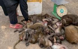Mua 16 cá thể khỉ về bán kiếm lời thì bị bắt