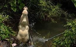 Người đàn ông bị cá sấu đoạt mạng khi đi câu cá