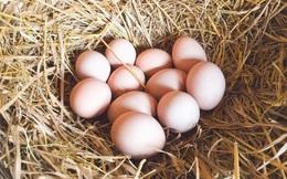 Ăn trộm trứng gà nhà hàng xóm nhưng không bao giờ bị bắt, một thời gian sau, đứa trẻ gặp phải chuyện ám ảnh cả đời
