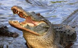 Nữ bác sĩ không may lao xe xuống dòng kênh toàn cá sấu