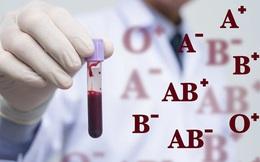 Phát hiện thú vị: Động vật cũng chia nhóm máu A, B, O… giống hệt như người