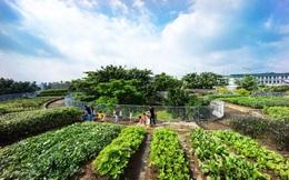 Ngôi trường ở Đồng Nai nổi bật trên báo nước ngoài vì vườn rau trên mây cho trẻ em
