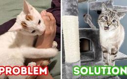 Boss thích gặm chân: Nỗi đau khổ của người nuôi mèo, đáng yêu thật đấy nhưng mà... đau thôi rồi và đây là cách để giải quyết