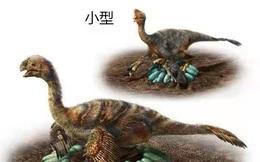 Phát hiện nhiều hóa thạch khủng long quý hiếm có niên đại 70 triệu năm ở Trung Quốc