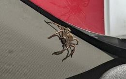 Giết nhện sát thủ trong ô tô, 3 ngày sau gặp cảnh kinh sợ