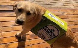 Lấy tiền mua đồ cho thú cưng của vợ đi uống rượu, người chồng đã làm ra một việc khiến dân mạng cười xỉu vì độ láu cá
