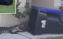 Chàng trai 26 tuổi dùng thùng rác tóm gọn cá sấu khổng lồ