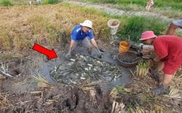 Ra đồng phát hiện vũng nước duy nhất còn sót lại, nhóm người tát cạn và kết quả đầy bất ngờ