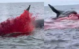 Clip: Xác cá voi trôi lênh đênh ngoài biển rồi bất ngờ nổ tung khiến ngư dân sợ điếng người