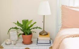 6 cây cực phẩm cho mọi căn chung cư: Không cần nhiều nắng, nhiệt độ nào cũng chơi