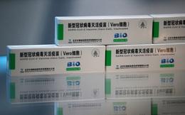 Phát hiện hàng nghìn hộp vaccine Sinopharm bị vứt la liệt dọc bờ kênh Ai Cập
