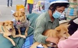 Vụ tiêu hủy đàn chó của cặp vợ chồng về Cà Mau: Đại diện Cục Thú y lên tiếng