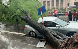 """Hà Nội: Bão số 7 gây mưa lớn cả ngày, nhiều cây xanh bật gốc, đè bẹp """"xế hộp"""" Camry"""