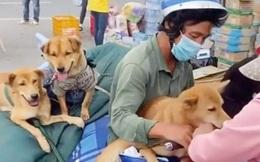 Áp lực dư luận vụ tiêu hủy 15 con chó, nữ Trưởng trạm y tế xã ở Cà Mau xin nghỉ việc