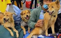 Chủ 15 con chó bị tiêu hủy ở Cà Mau: Dùng 50 triệu 'đại gia' cho để mua đất, lấy chỗ nuôi bầy chó mới