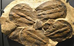Sự kiện tuyệt chủng kỷ Ordovic: Lần đầu tiên sự sống Trái Đất biết tới 'mùi cay đắng'