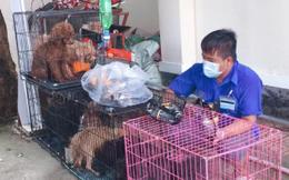 """Cán bộ phường nuôi giúp đàn chó của gia đình F0 đi cách ly: """"Chăm sóc vài chú chó đâu là vấn đề"""""""