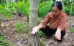 """Nam Định: Trồng loại cây mỗi năm """"ăn"""" vài nắm muối, trả vài phân vàng"""