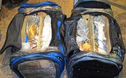 Hành khách bị chặn ở chốt kiểm tra sân bay vì 2 túi hành lý bất thường, đội an ninh không thể tin vào mắt mình khi mở túi