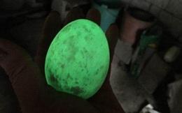 Được mọi người chúc mừng vì tìm thấy quả trứng biết phát sáng, chàng trai chưa kịp vui đã nhận tin sốc