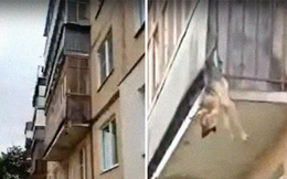Phát hiện chú chó suýt chết vì bị treo ngược ngoài ban công, câu chuyện đằng sau khiến ai cũng phẫn nộ và xót xa