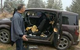 """Người đàn ông đỗ xe bên rừng, quay lại bỗng thấy xe """"nát bét"""": Khi nhận ra thủ phạm mới thầm cảm ơn trời đất!"""
