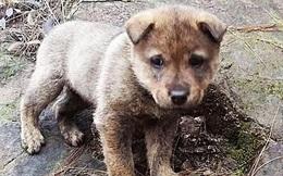 Anh nông dân nghèo nhặt được chú chó, càng nuôi càng thấy màu lông kỳ lạ, người làng bất ngờ: Cậu giàu to rồi!