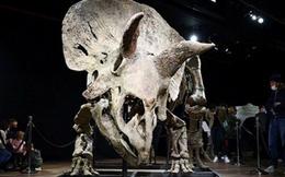 Đại gia ẩn danh chi 175 tỷ đồng mua hóa thạch khủng long 66 triệu tuổi