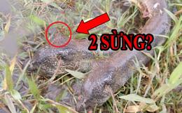 Đi bắt lươn, người đàn ông giật mình khi thấy con 'lươn' có sừng: Rắn Hoàng xà cực độc?