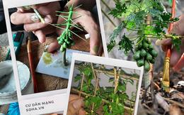 Nghỉ dịch ở nhà, chàng phụ hồ trổ tài làm cả vườn cây xanh từ giấy, dây thép: Tác phẩm khiến nhiều người nể