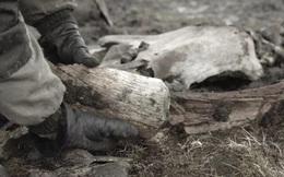 Tìm thấy bằng chứng về sự tồn tại của thợ săn thời kỳ đồ đá ở Bắc Cực