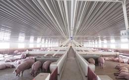 Dabaco góp vốn 100 tỷ đồng thành lập công ty nuôi lợn tại Thanh Hóa