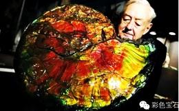 Ammolite: Khi sống là sinh vật cổ đại, chết đi hóa thành đá quý hiếm hơn cả kim cương