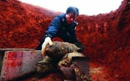 """""""Quả bom"""" được đào lên ở Tứ Xuyên khiến người dân kinh hãi tột độ, chuyên gia nhìn thấy thì mừng như bắt được vàng!"""