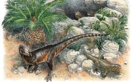 Phát hiện khủng long 'rồng' xứ Wales, kích thước bằng một con gà