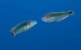 Độc đáo những loài sinh vật có các đặc điểm kỳ lạ như đến từ hành tinh khác