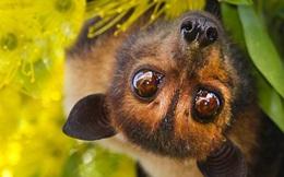 1001 thắc mắc: Loài động vật nào sống sót khi mang virus chết người?