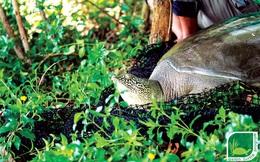 Gian nan 17 năm lần tìm rùa Hoàn Kiếm