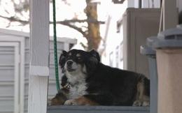 Chú chó bất ngờ sở hữu khối tài sản hàng triệu USD