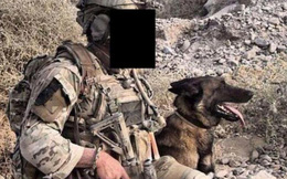 """Số phận bất ngờ của những chú chó chiến đấu """"hết đát"""" trong quân đội Anh"""