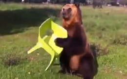 Hai du khách Nga đấm ngất gấu trong công viên Quốc gia vì tưởng là bảo vệ đi soát vé